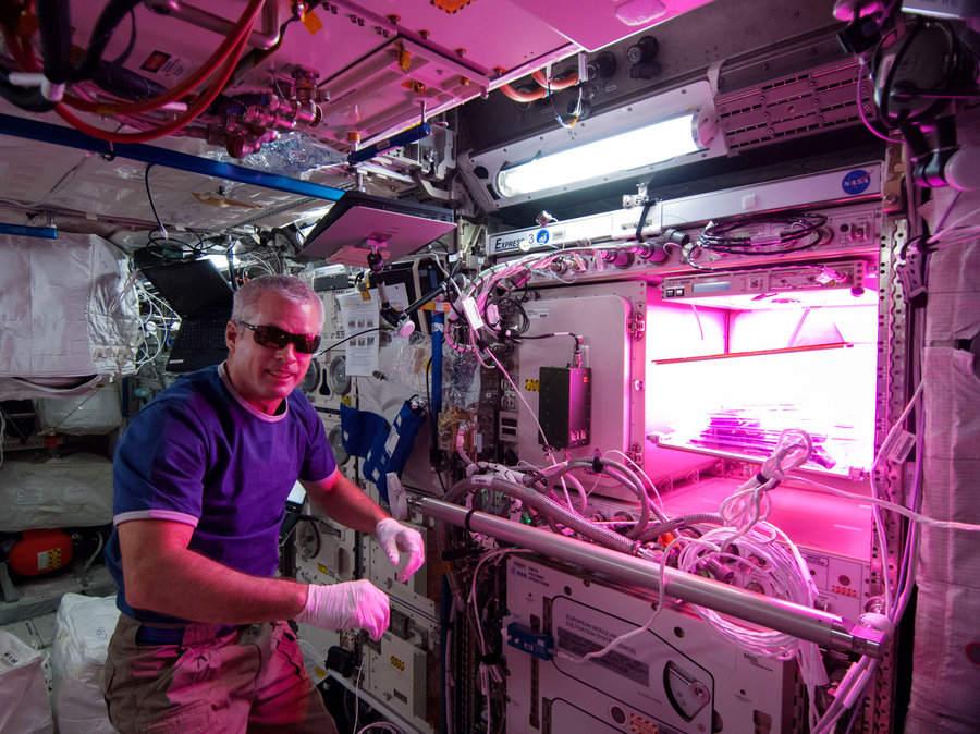 NASA LED-es növénytermesztés kutatás