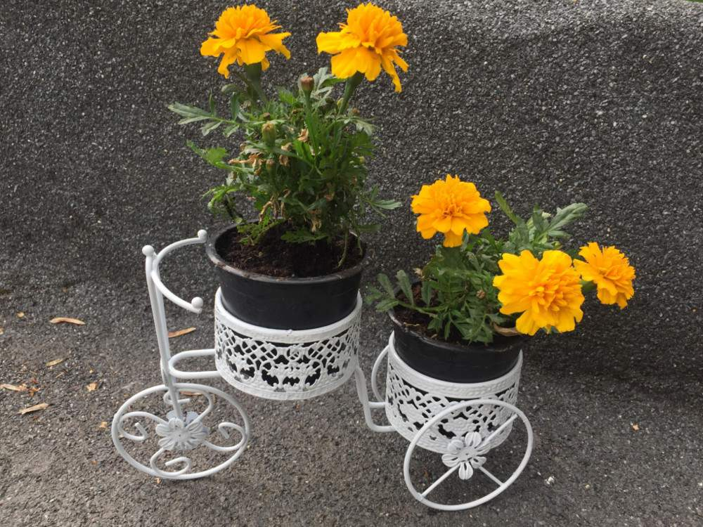 vintage kerékpár virágtartó 2 cseréptartóval