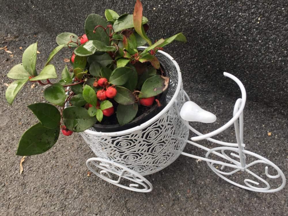 Virágtartó bicikli