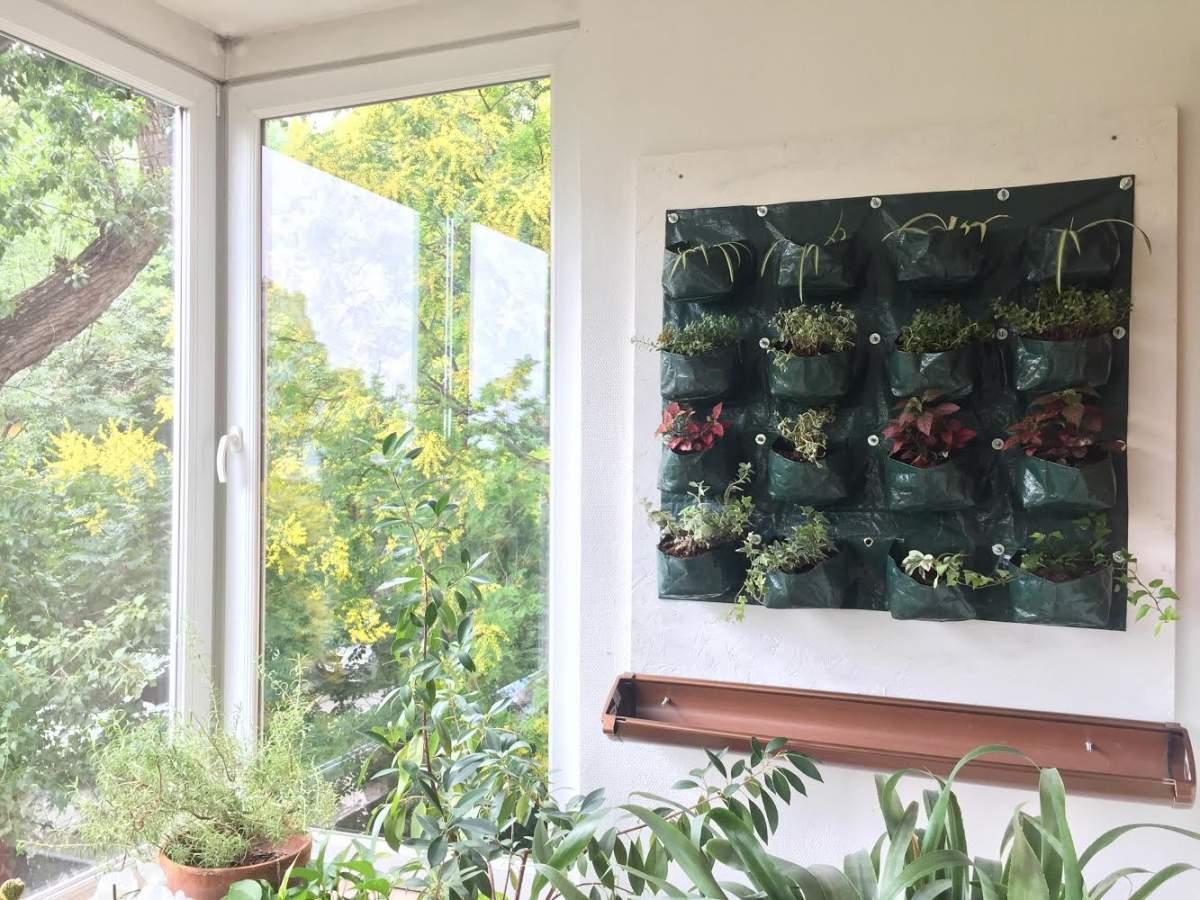 Vertikális, avagy zöldfal a lakásunkban