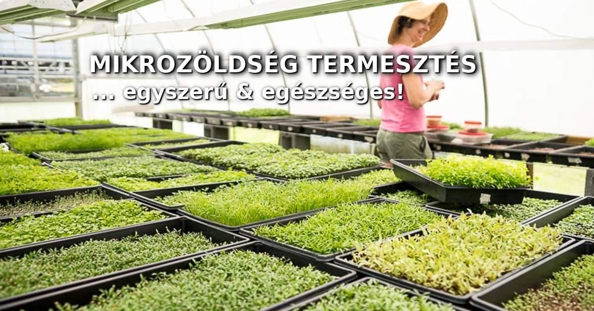 Mikrozöldség termesztés
