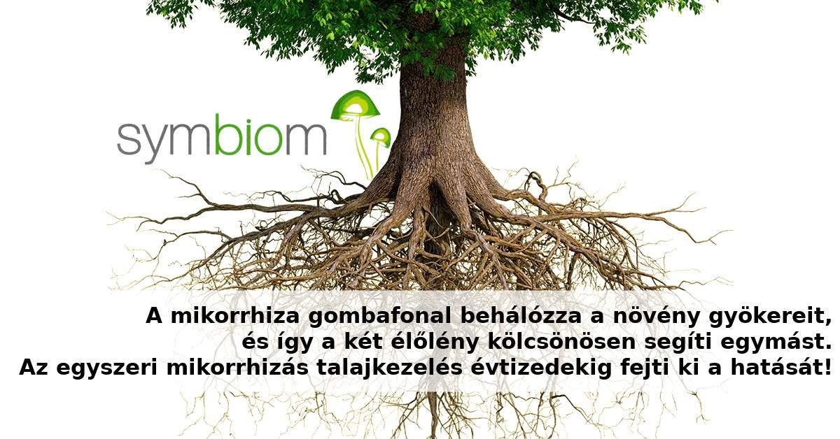 Mikorrhiza talaj kezelés