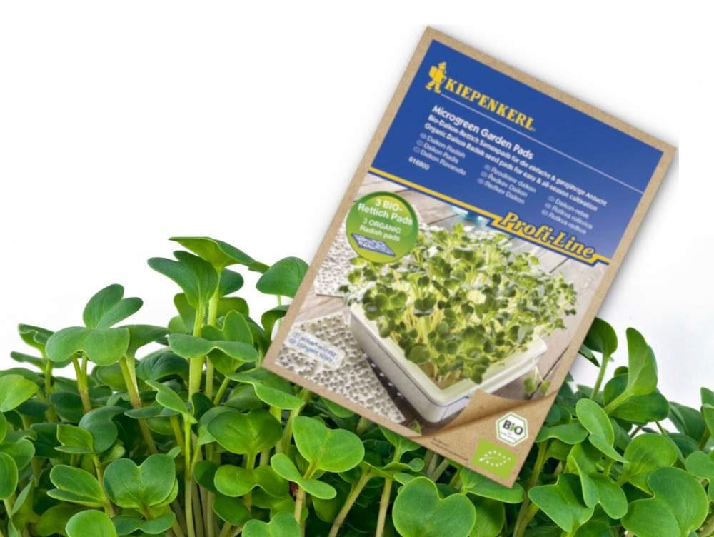 Daikon retek mikrozöldség termesztéshez