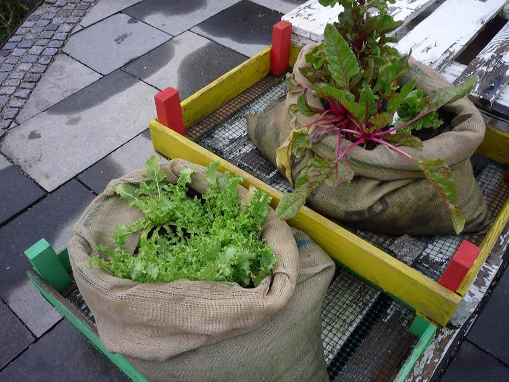 termesztés juta növénytermesztő zsákban