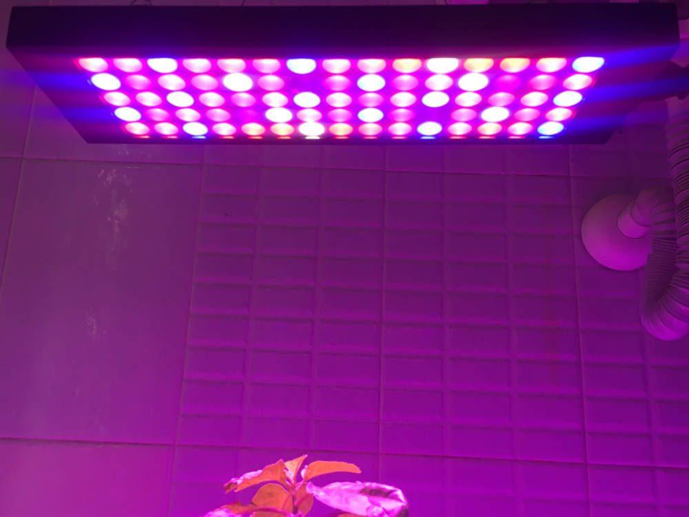 LED-es növénytermesztő lámpák