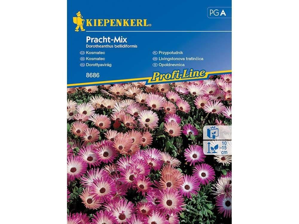 Dorottyavirág Pracht-Mix