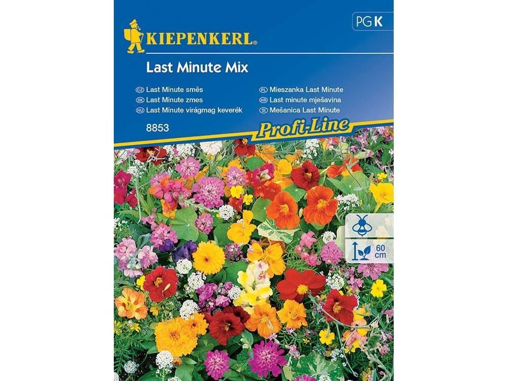 last minute virágok