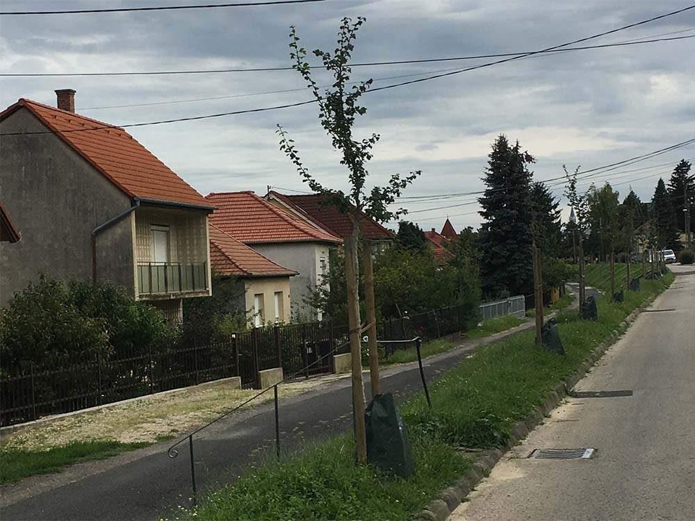 faöntöző zsákok, Hévíz, Zrínyi utca