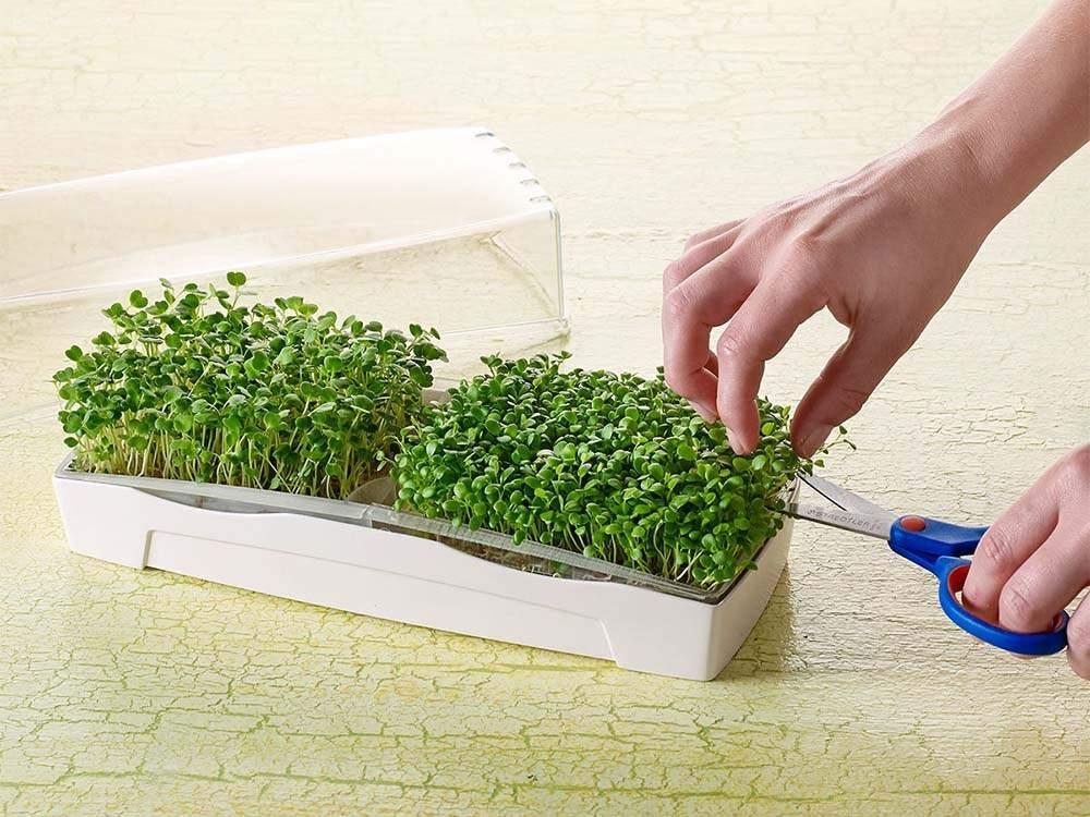Mikrozöldség csíráztató készlet duo 4