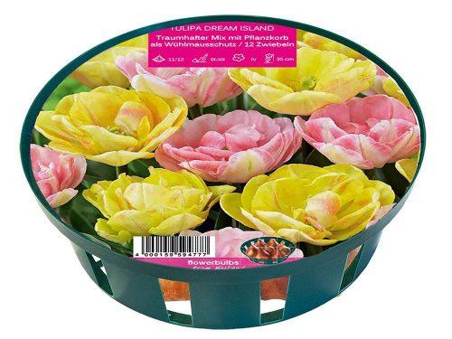 Dream Island tulipánok
