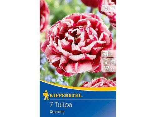 Kiepenkerl Drumline tulipán