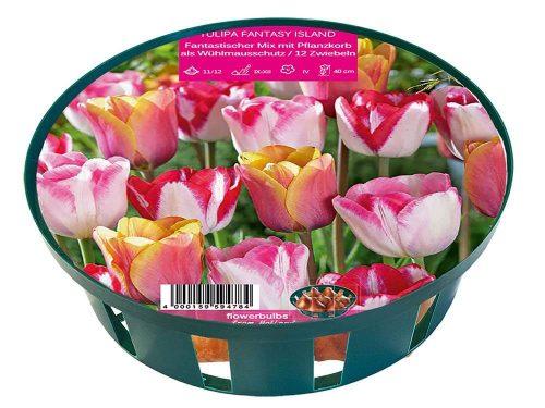 Fantasie Island tulipámok