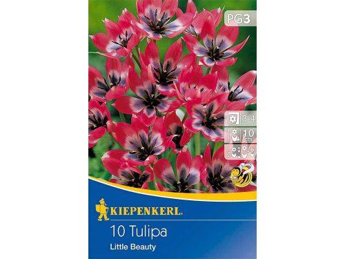 Little Beauty tulipán