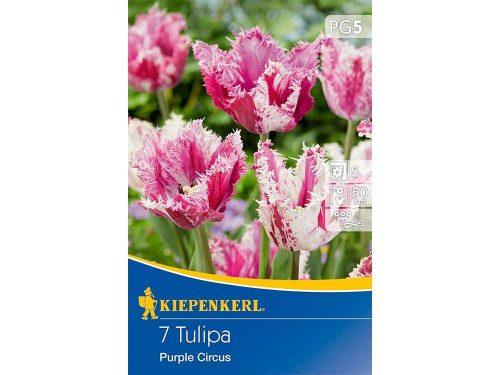Kiepenkerl Purple Circus tulipán