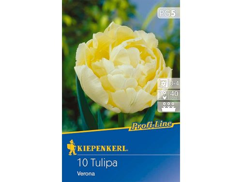 Kiepenkerl Profi-lineVerona tulipán