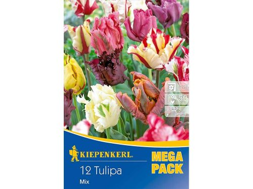 papagáj tulipán mix