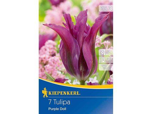 Kiepenkerl Purple Doll tulipán