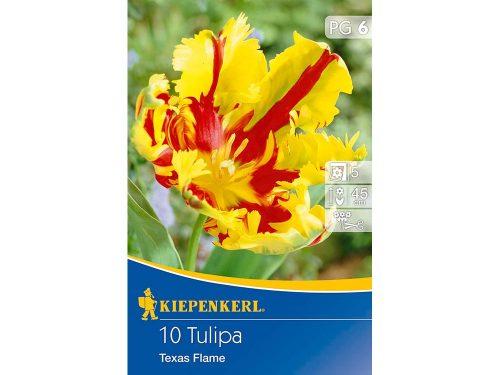 Kiepenkerl Texas Flame tulipán